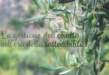 innovazione in olivicoltura