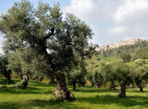 biodiversità olivicola marche