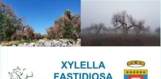 xylella opuscoli