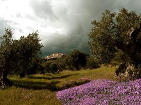 olivicoltura lucana