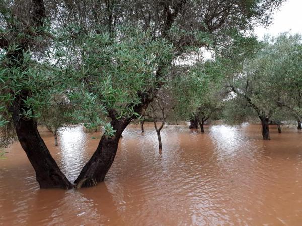 cambiamento climatico olivicoltura