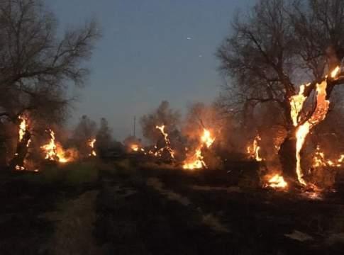 incendi oliveti