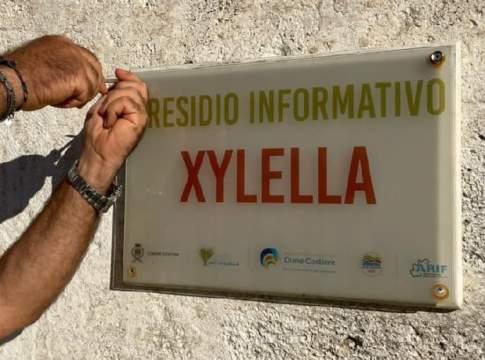 xylella presidio informativo