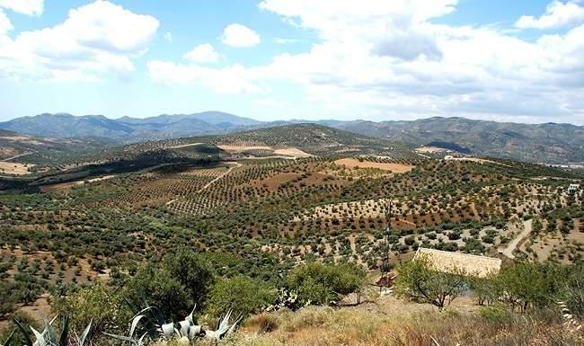 Spagna olio oliva