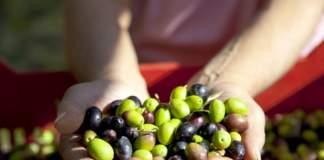 olio oliva nuovo