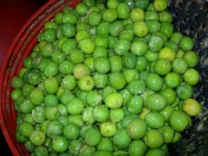 olive in fusto